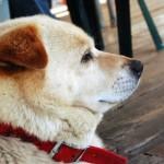 【驚愕】犬の驚くべき秘密 7選