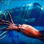 【驚愕】実際に発見された未確認生物 7選