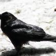 raven-810x495